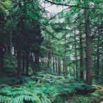 3 Reasons Why Baby Boomers Should Connect With Nature