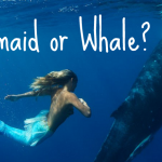 Do You Want to Be a Mermaid Or a Whale? The Answer Might Surprise You!
