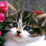 How Cats Greatly Improve Our Health And Happiness